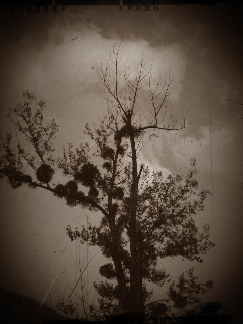 Old tree by Iuliaq