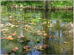 The water lillies to be
