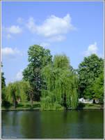 Willows on Herastrau Lake by Iuliaq