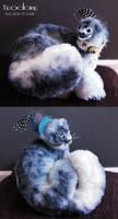 Teodore - the blue seal kitten