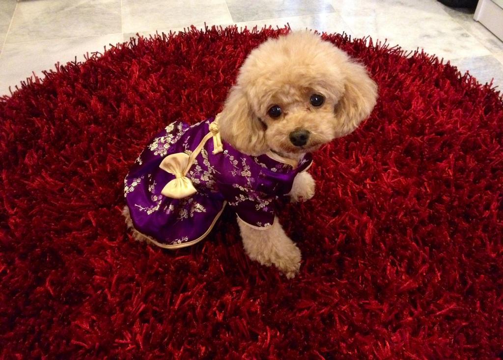 Little Miss Cheongsam by PoodleSchmoodle