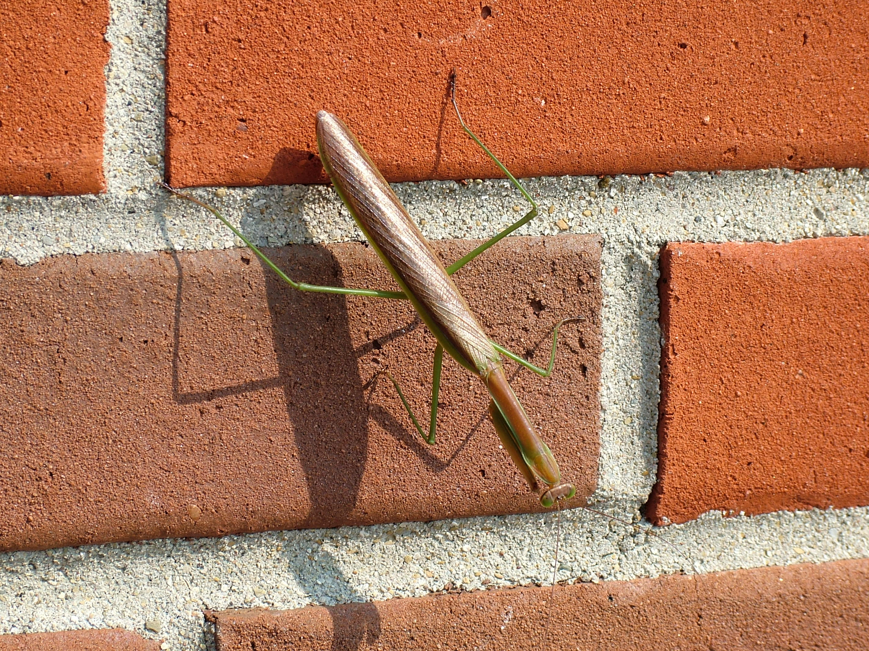 mantis by DocX-Stock