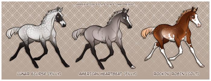 Zlesdin pedigree foal auction | CLOSED
