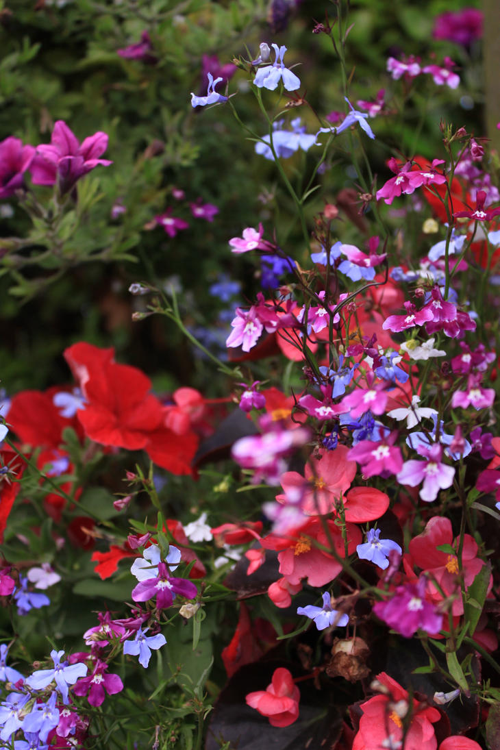 Garden Flowers by Nosferatus-Lair