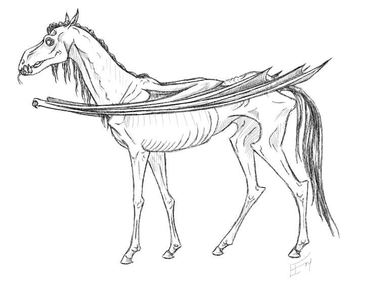 buckbeak coloring pages - photo#13