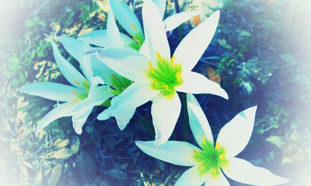 flowers by Goldphishy