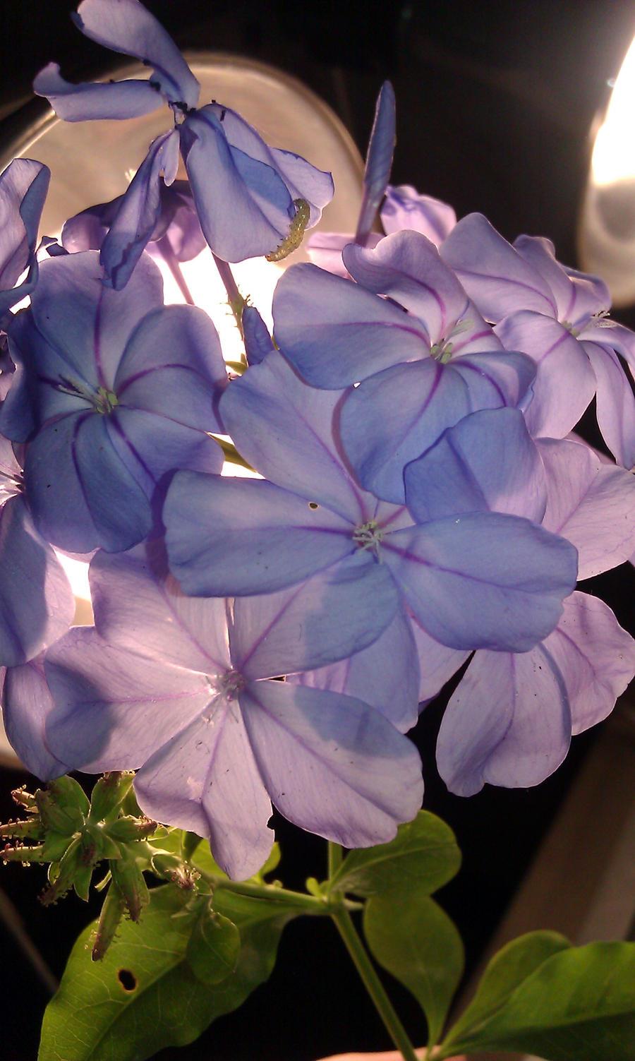 purple flowers by Goldphishy