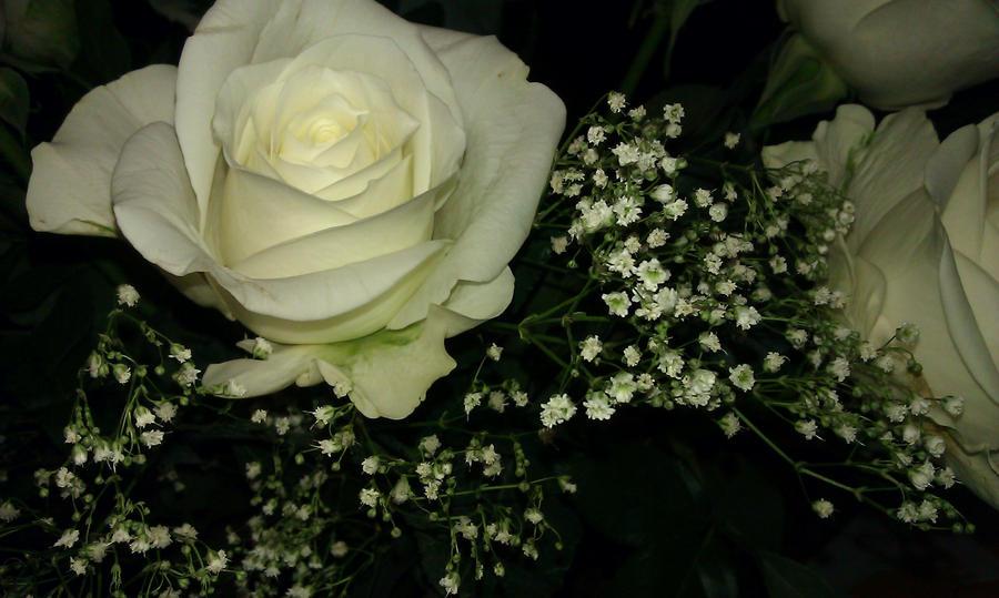 roses by Goldphishy
