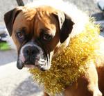 dog- I love christmas by scratzilla