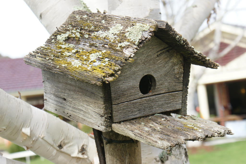 Bird house 3 Larger file  STOCK by scratzilla