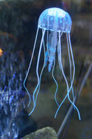 JELLY FISH 1 LARGER FILE STOCK by scratzilla