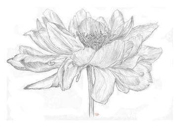 Flower Study by Manatiini