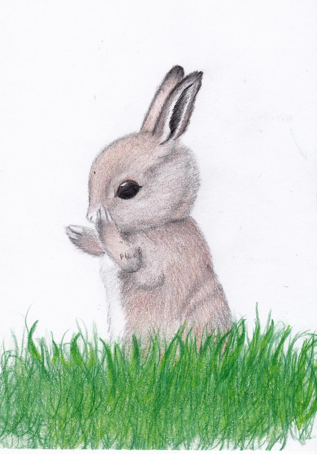 cute baby bunny... Cute Baby Bunny Drawings