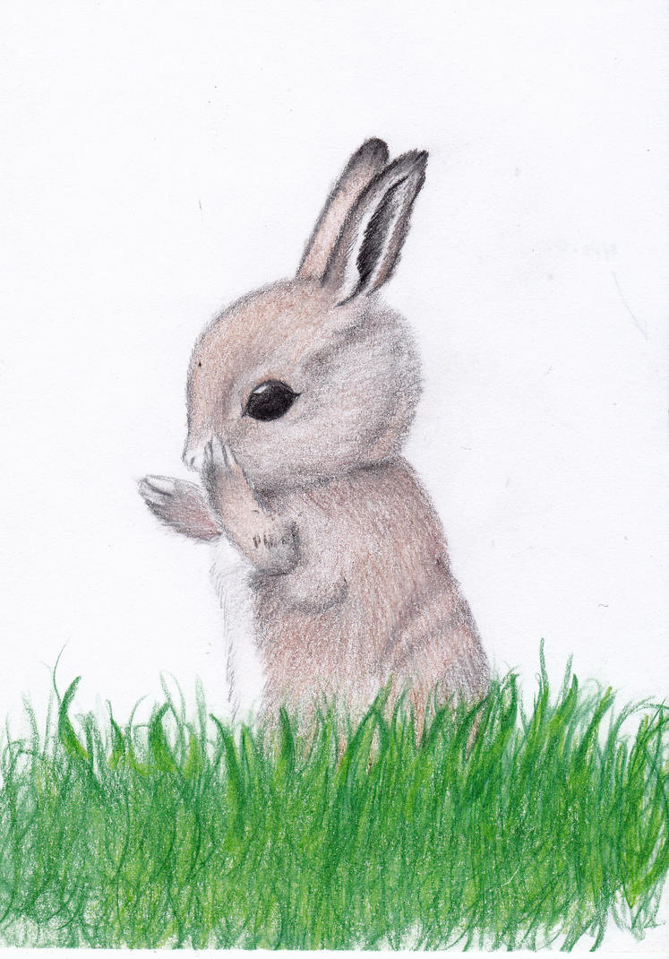 cute baby bunny by jennameowth on deviantart