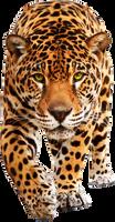leopard PNG by fenida