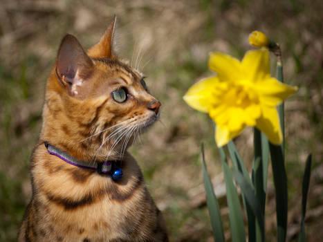 Cleo and the daffodil