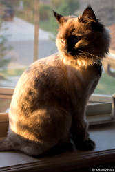 Sunset Cat