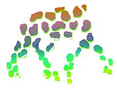 Lupus F Body Rainbow Spots