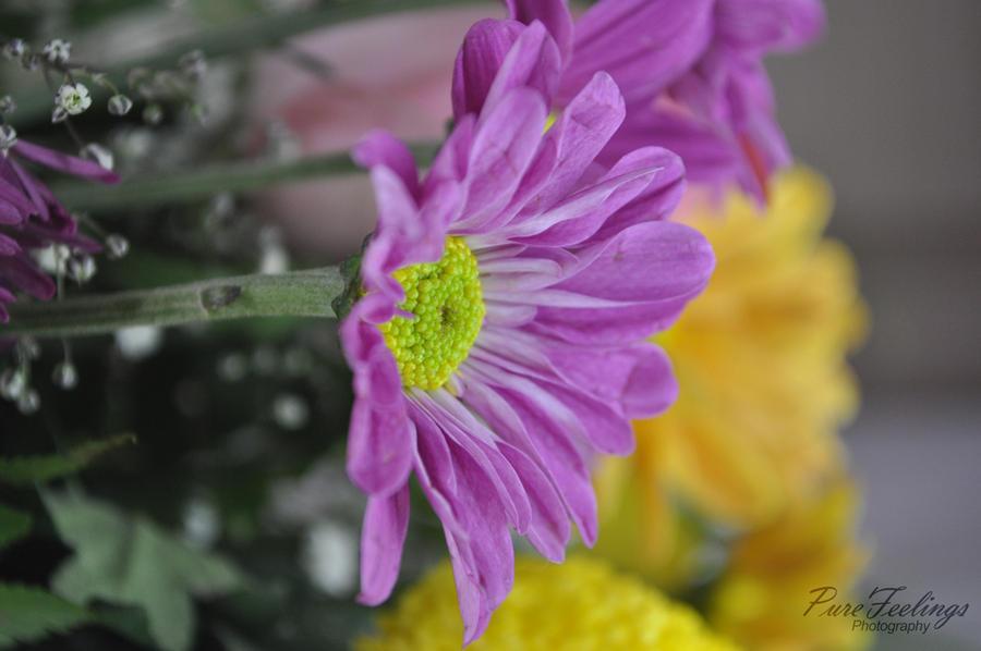 Princess flower by pure feelings on deviantart - Prinses pure ...