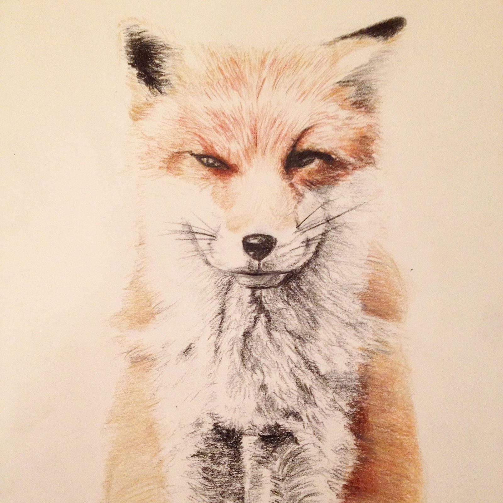 It is a photo of Playful Fox Pencil Drawing