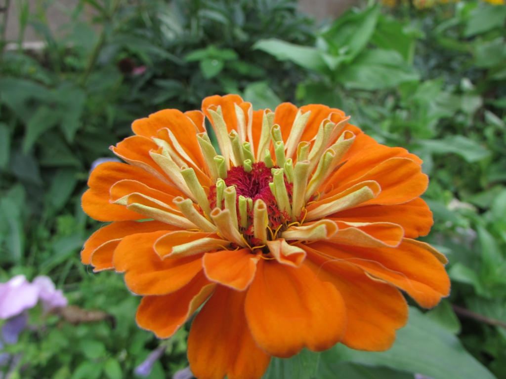 Orange Flower by marshmallowkeyblade