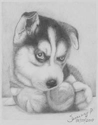 Alaskan Husky by helluvaman