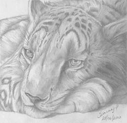 Snow leopard sc1 by helluvaman
