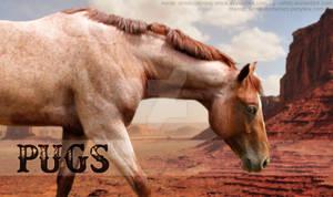 Pugs Quarter Pony