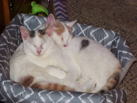 Snowball and Marshmallow