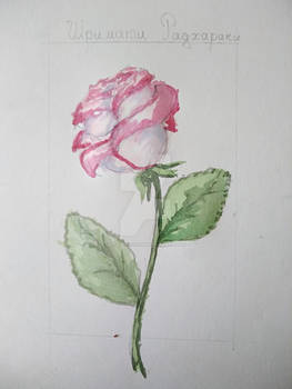 Rose by watercolor
