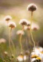 Sunny Day by sandraa79