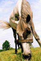 equus I by T-E-N-E-B-R-A