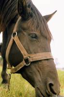 equus II by T-E-N-E-B-R-A