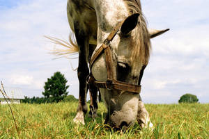 equus III