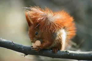squirrel by T-E-N-E-B-R-A