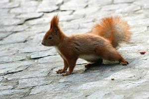 squirrel II by T-E-N-E-B-R-A