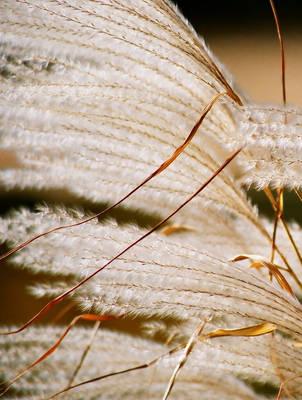 canus -  alius color autumno by T-E-N-E-B-R-A