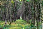forest foret des aulneaux Orne France