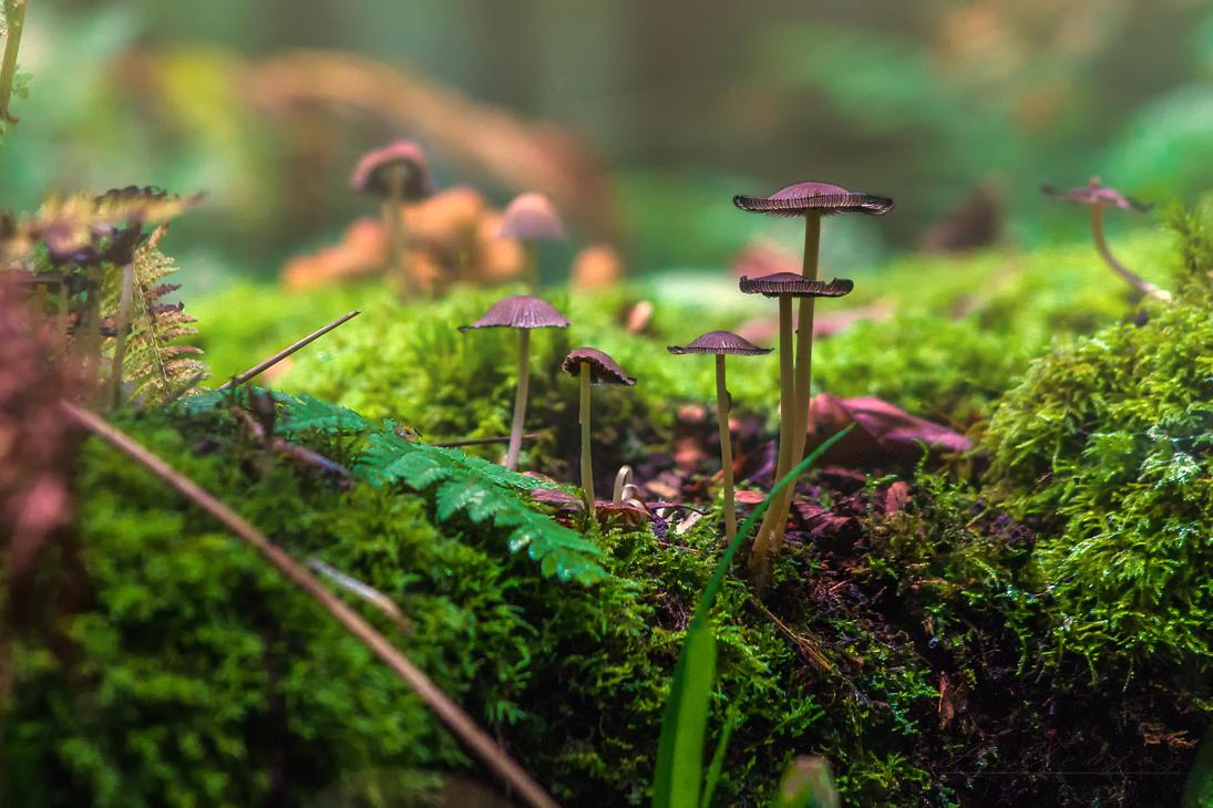 Autumn mushroom by hubert61