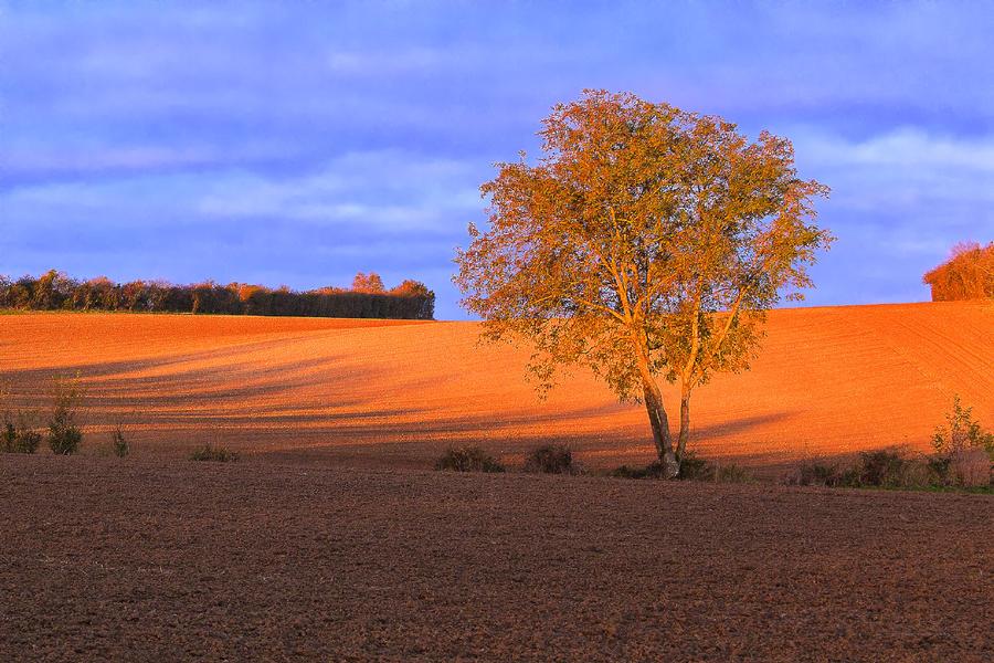 landscape of Calvados France by hubert61