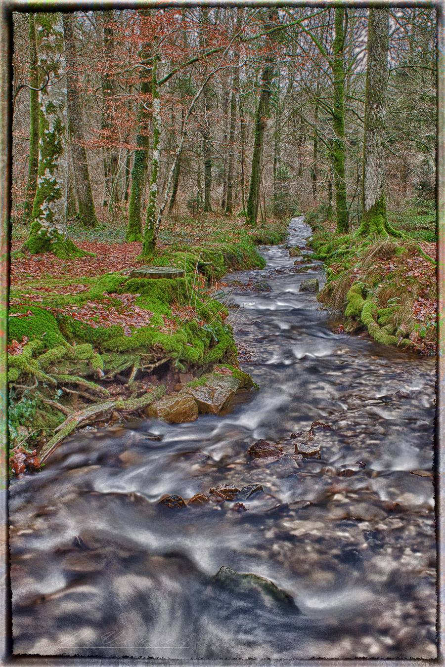 Forest of Ecouve Orne France by hubert61