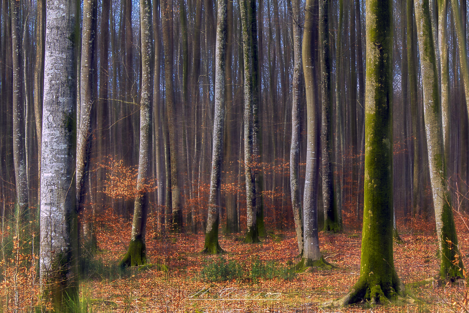 the forest  Orne France by hubert61