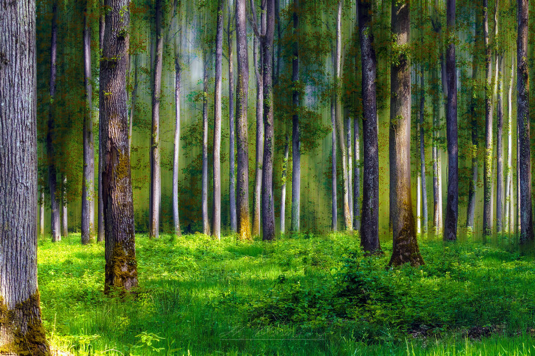 Forest1 Orne France by hubert61