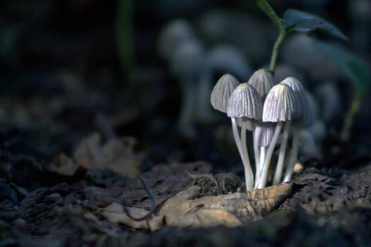 mushrooms5