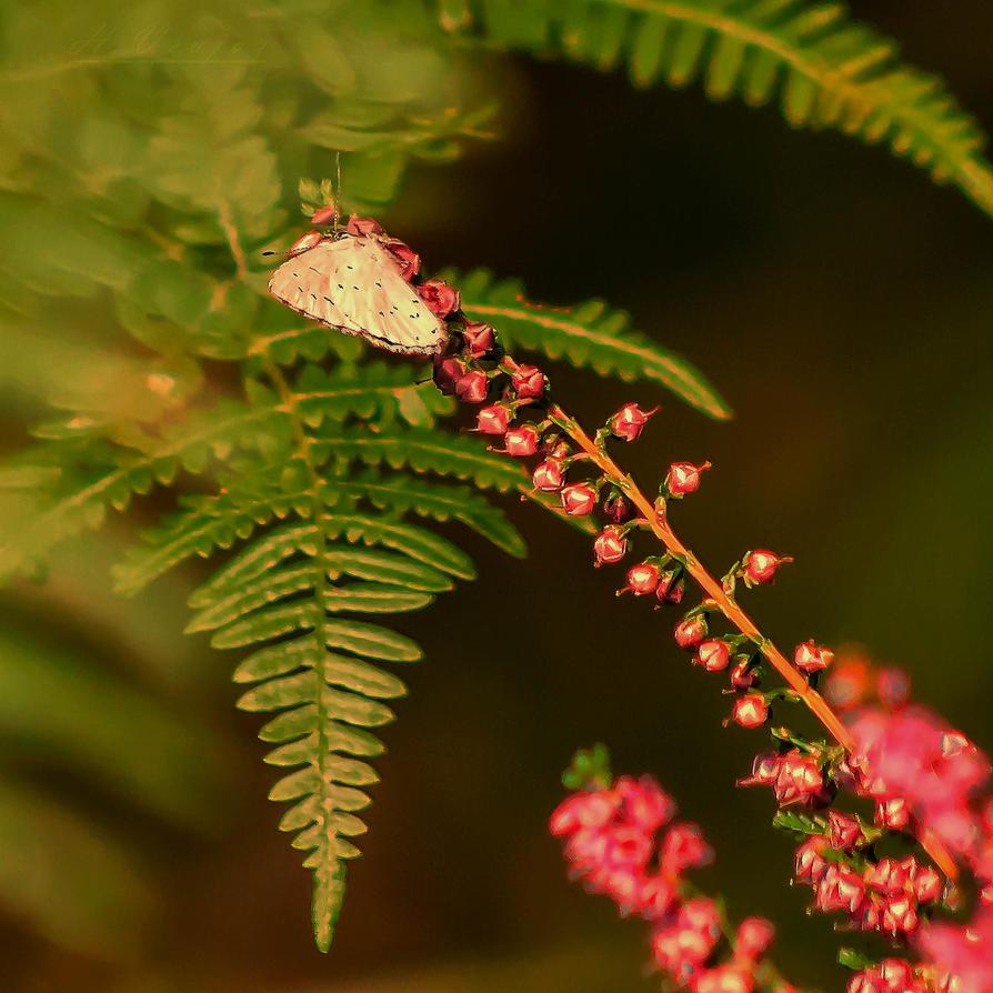 Papillon11 by hubert61