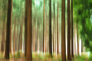 Foret5 by hubert61