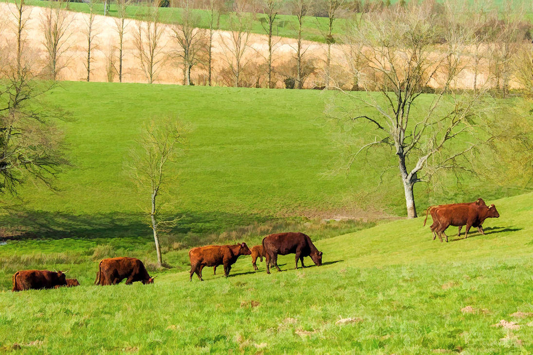 Les  Vaches by hubert61
