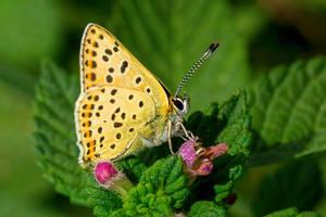Papillon17 by hubert61