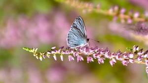Papillon26 by hubert61
