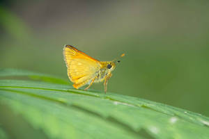 Papillon by hubert61
